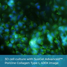 SusGel Advanced™ Porcine Collagen Type I (Best for 3D Cell Culture)